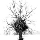 The Tree by marting04
