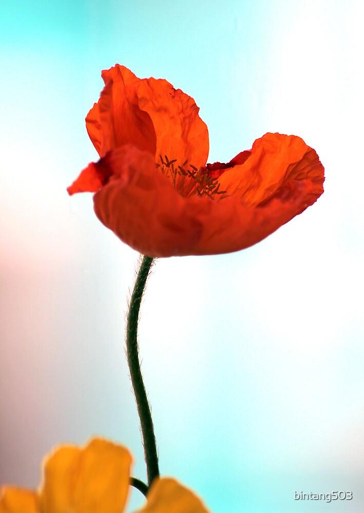 Happy Orange Day! by bintang503