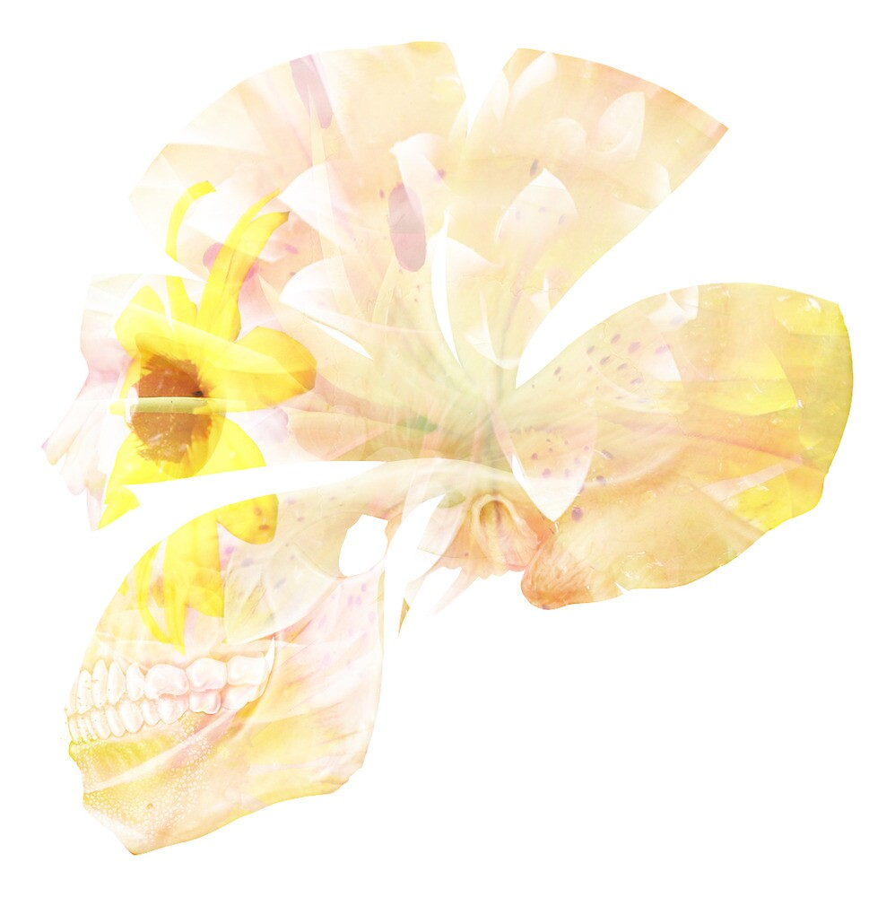 Floral Skull by h0usemouse