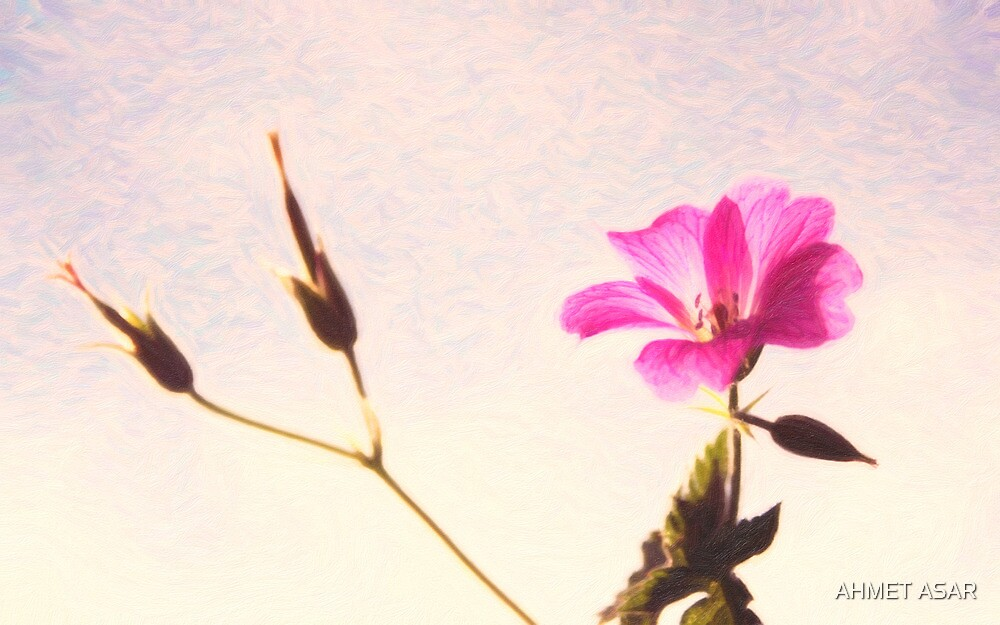 flower close up 13 by MotionAge Media