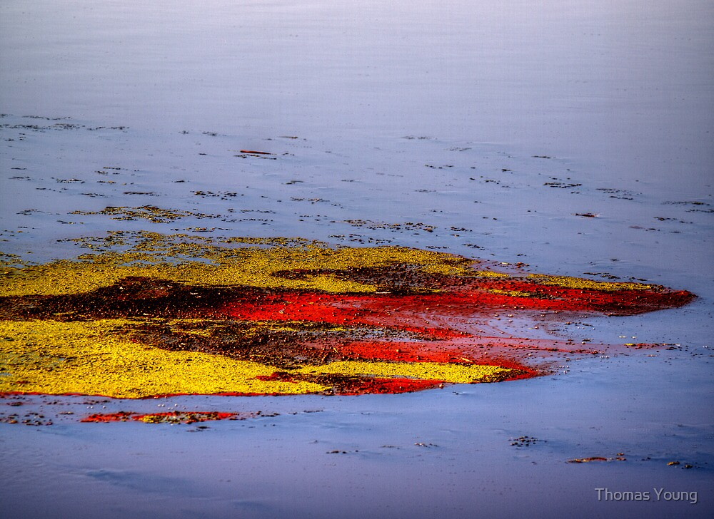 Psychedelic Algae  by Thomas Young