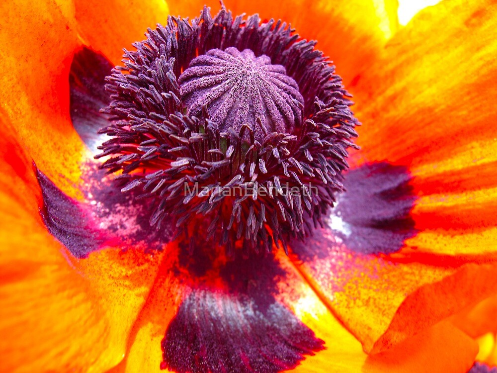 Perfect Poppy by MarianBendeth