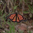 Butterfly Flower by MissResin