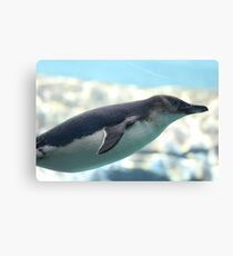 GLIDING PENGUIN IN WATER Canvas Print