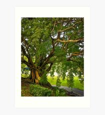 Bodhi Tree Art Print