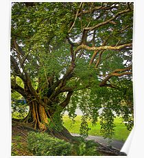 Bodhi Tree Poster