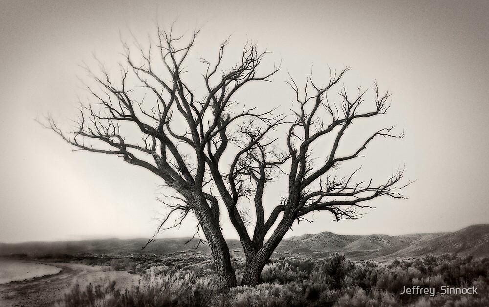 Old Washoe tree #1 by Jeffrey  Sinnock