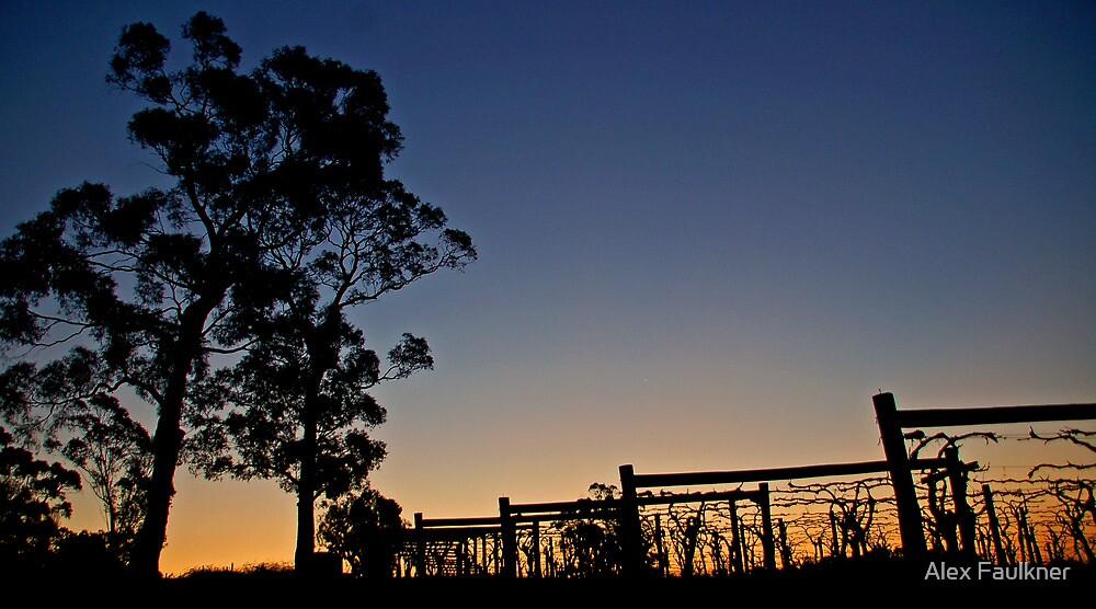 Vines at Sunset by Alex Faulkner