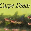 Carpe Diem by Joni  Rae