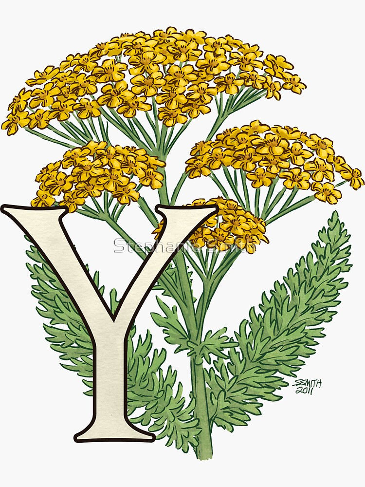 Y is for Yarrow floating by stephsmith