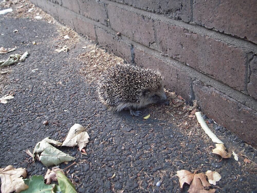 Hedgehog by MalibuQueen
