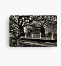 Beyond Gnarled Tree Canvas Print