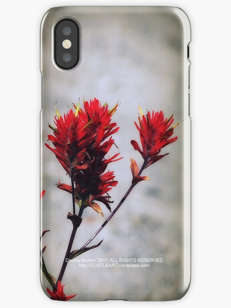 paintbrush wildflowers, Johnston's Ridge 2 by Dawna Morton