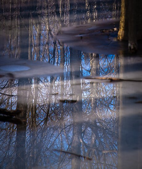 Tree In Ice by Stephen Hill