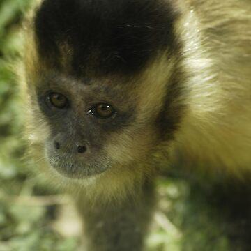 Very Sad Looking Monkey by Coemlyn
