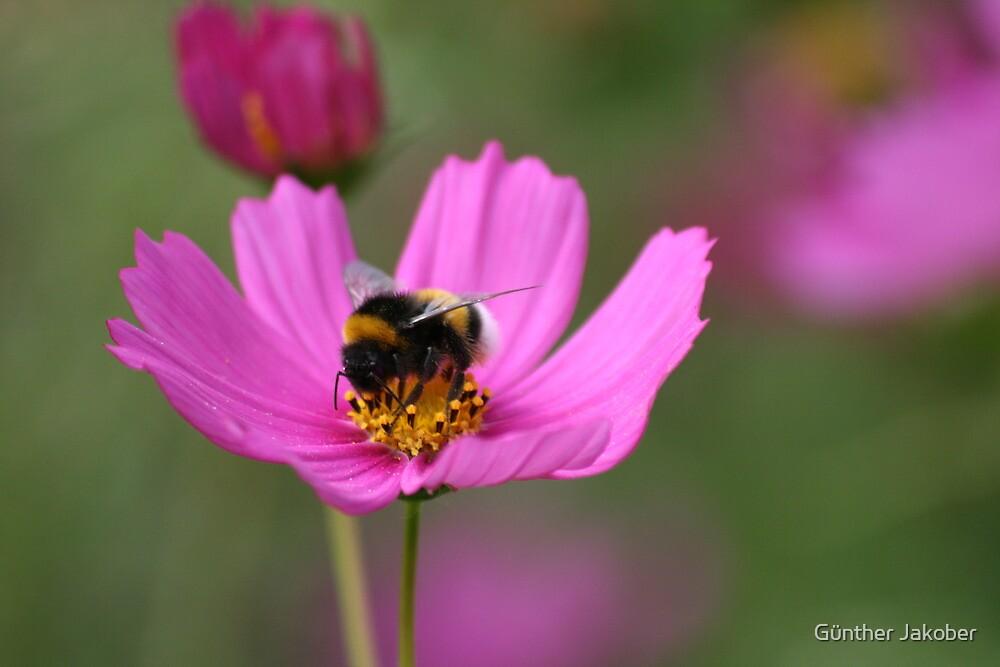 Bee by Günther Jakober
