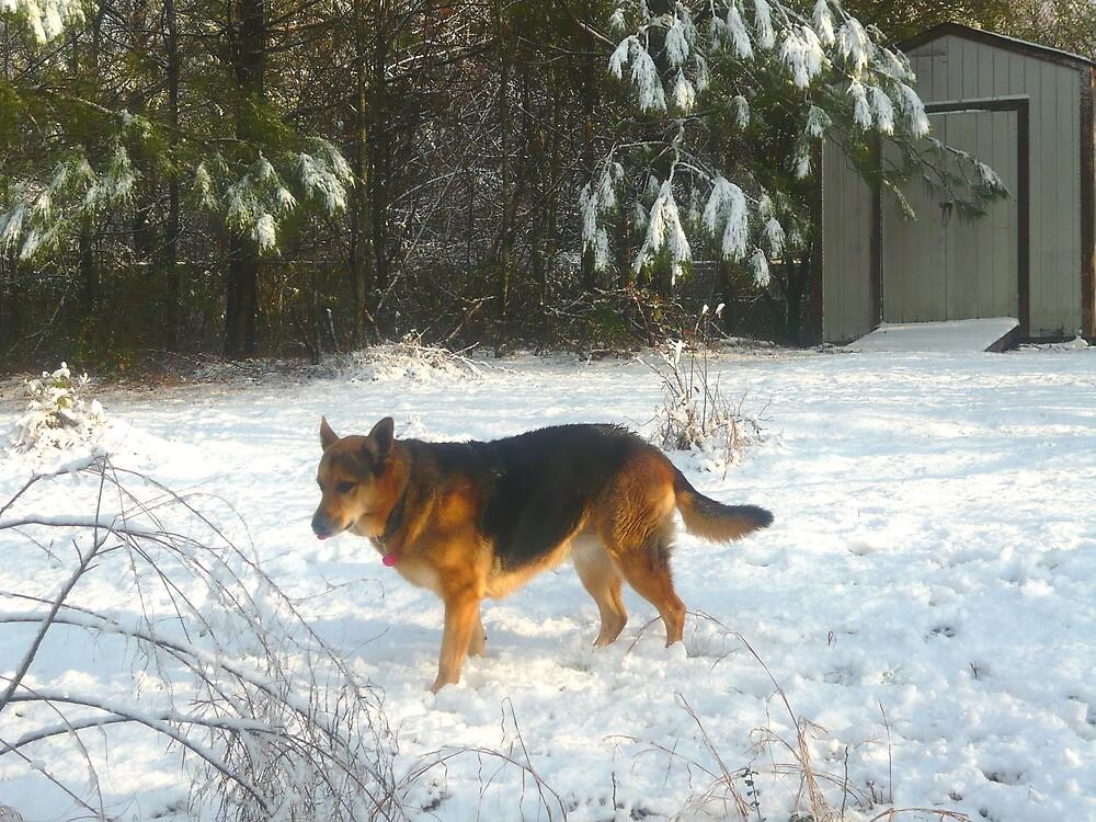 German Shepherd in the Snow by Vivian Eagleson