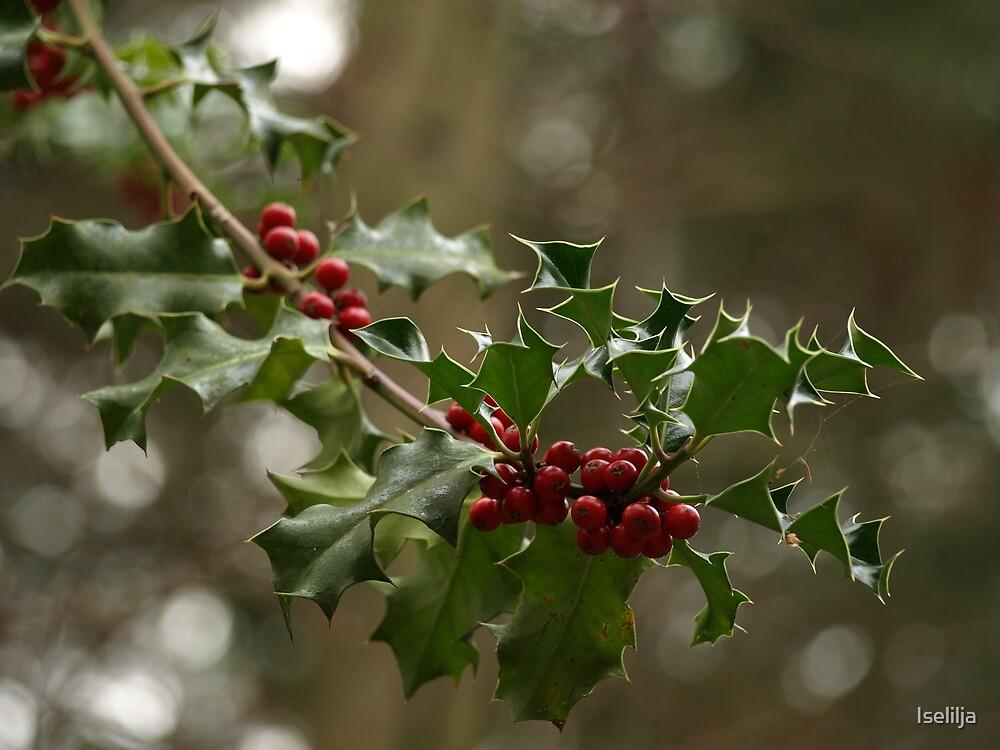 Wild Holly by Iselilja