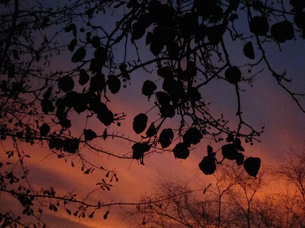 SC Sunset 001 by Stefanohbody