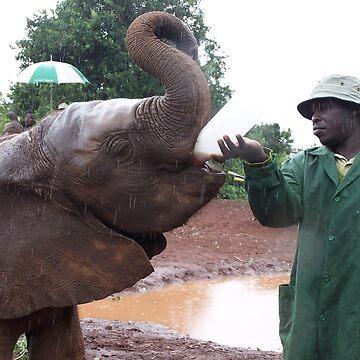 Elephant feeding, Kenya by martina