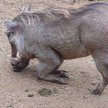Warthog, Kenya by martina