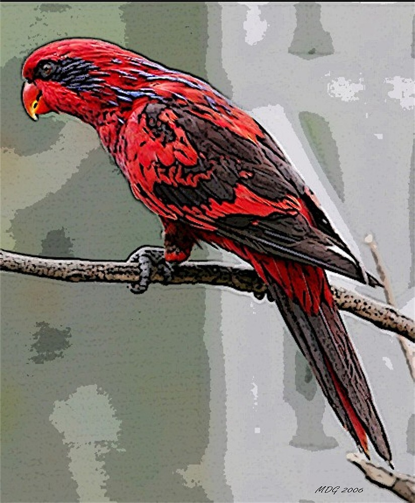 Blue Streaked Lory Bird  Poster Print & Card by Oldetimemercan