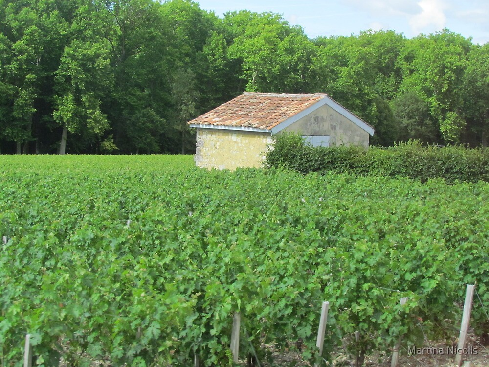 Vineyard at Bordeaux, France by Martina Nicolls