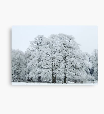 Frozen and Frosted Trees Canvas Print