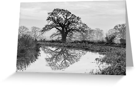 Reflection in the Bend by John Dunbar