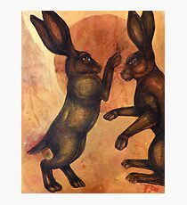 Boxing Hares Photographic Print