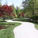 Beautiful Path by Featherbrush