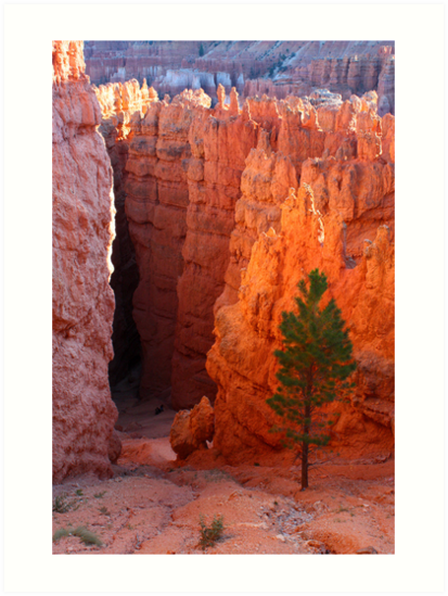 Bryce Canyon Path by Daniel Owens