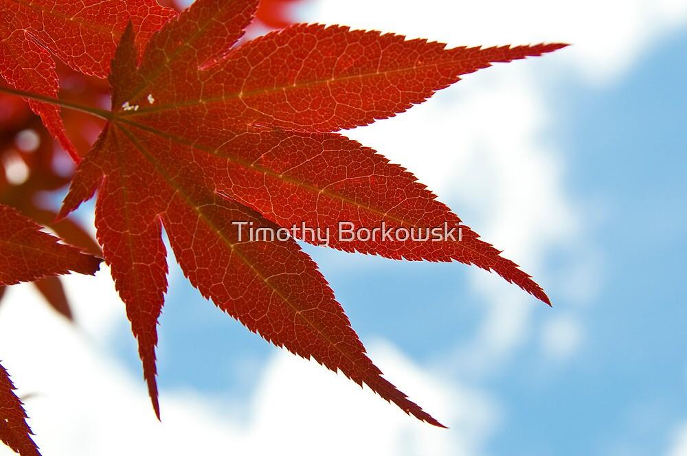 Japanese Maple Leaf by Timothy Borkowski