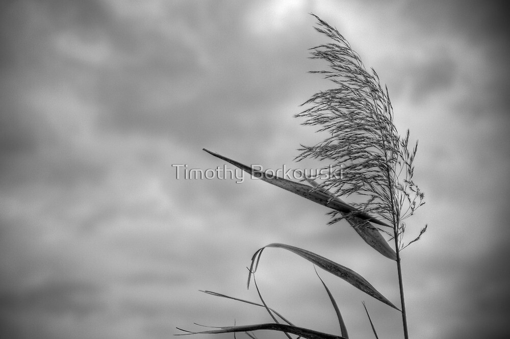 Blowing in the Wind by Timothy Borkowski