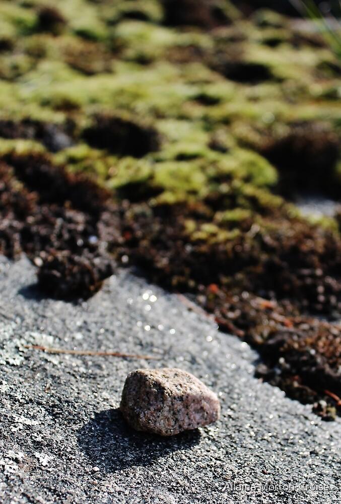 Caleb's Stone by Allaina Morton-Cruise