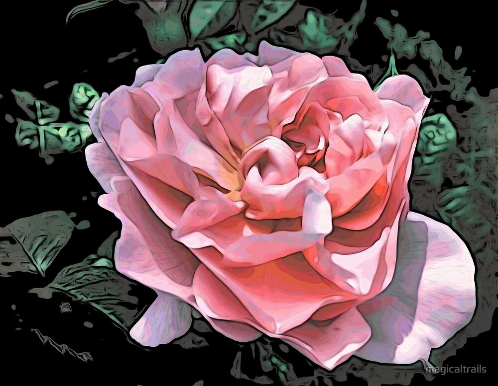 Pink Rose - altered by magicaltrails