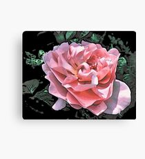 Pink Rose - altered Canvas Print