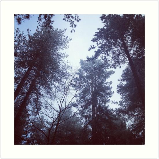 Sherwood Forest pines by Robert Steadman