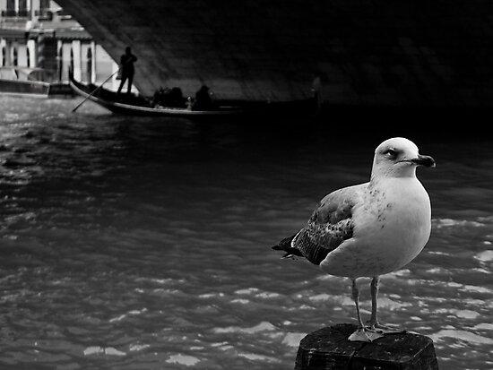 LONELY DUDE by June Ferrol