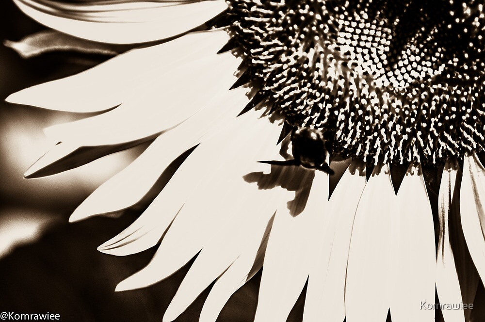 Happiness is... approach sunflower...  by Kornrawiee