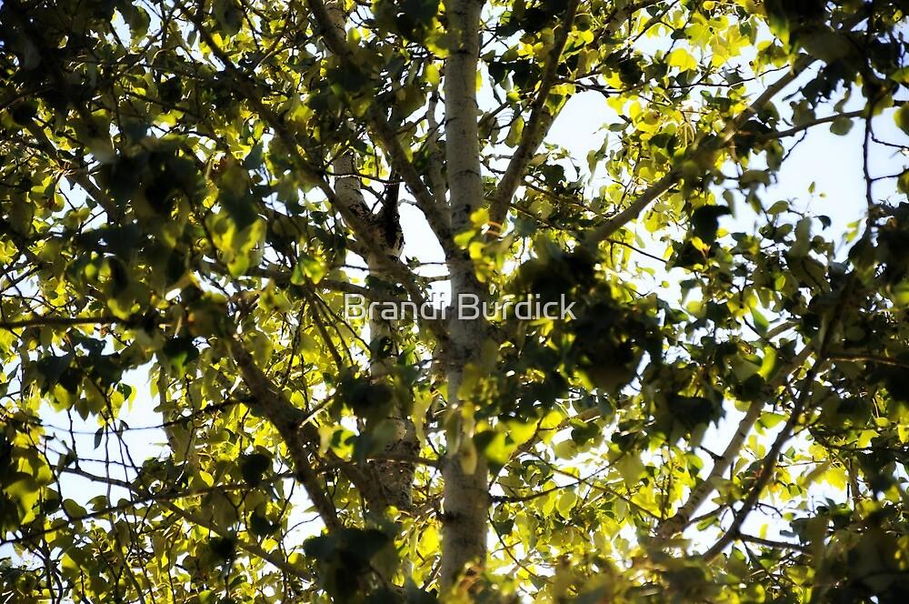 into the birch tree~ by Brandi Burdick