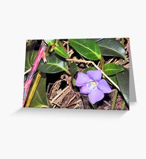 Vinca Blooming in January in Cleveland Greeting Card
