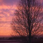 WINTERY SUNSET by Pauline Evans