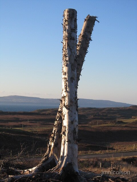 Tree stumps by jmnicolson