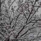 Snowfall by Sharlene Rens