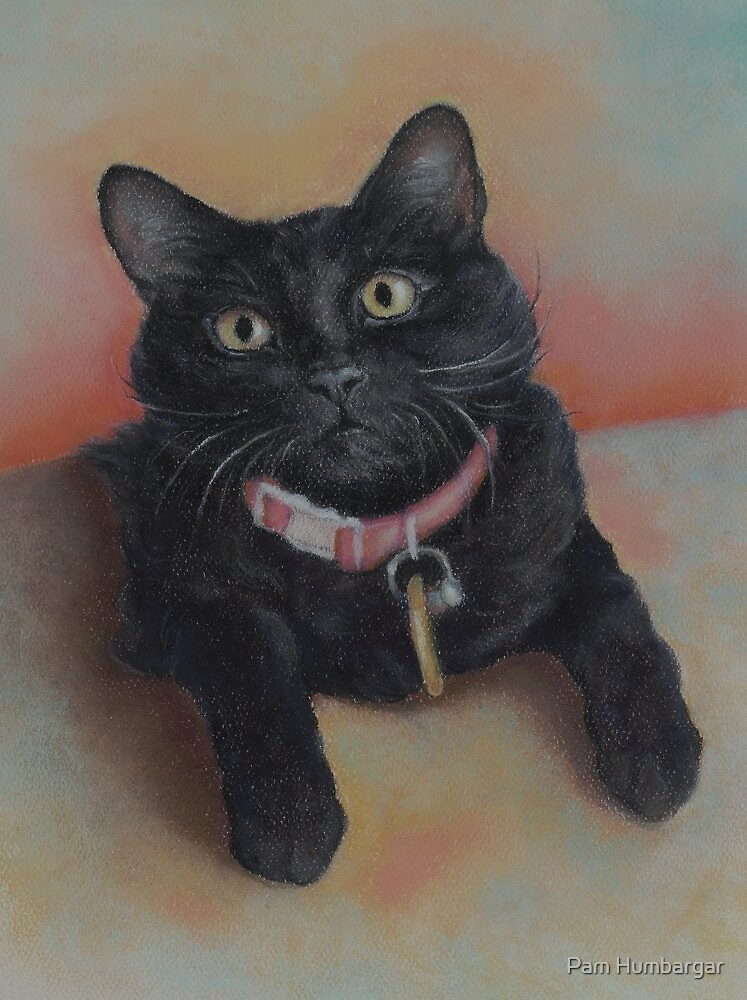 Little Black Kitty by Pam Humbargar