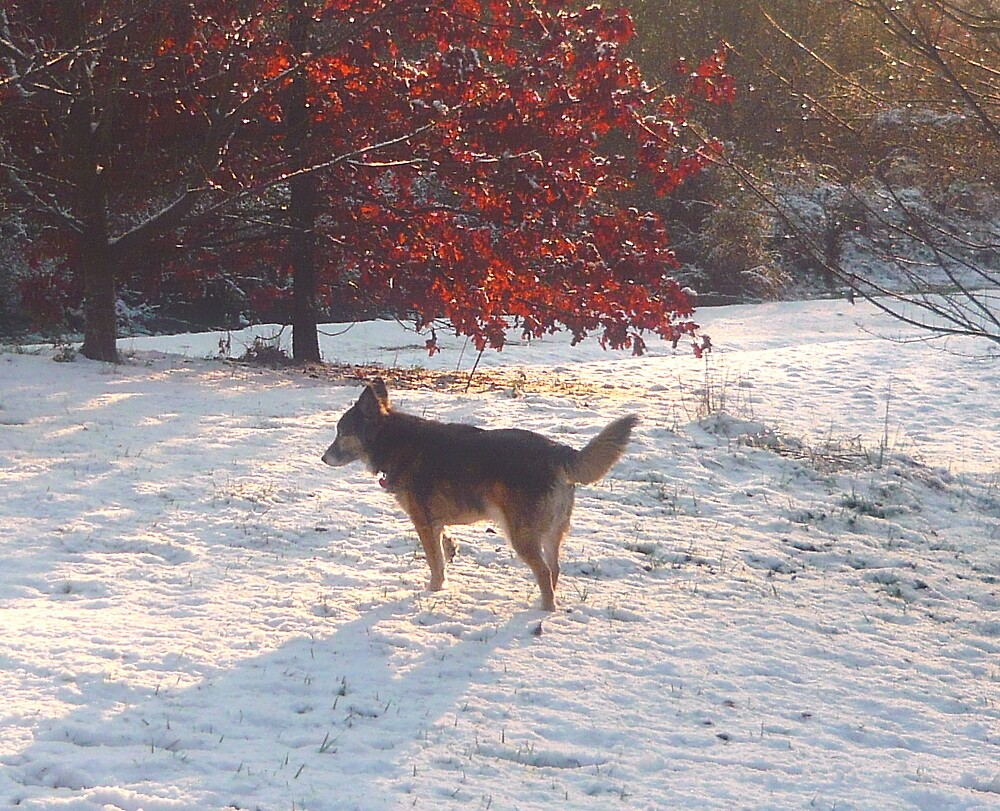 Alabama Snowshine by Vivian Eagleson