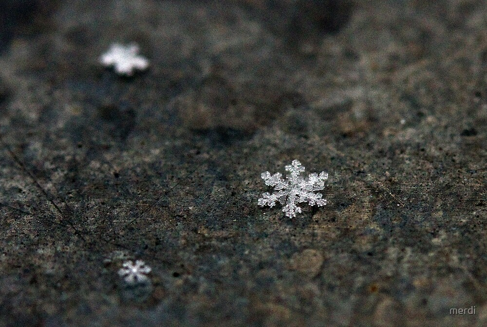 Snow flakes  by merdi