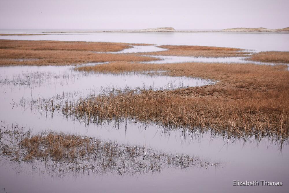 Marsh Gray's Beach Barnstable Cape Cod by Elizabeth Thomas