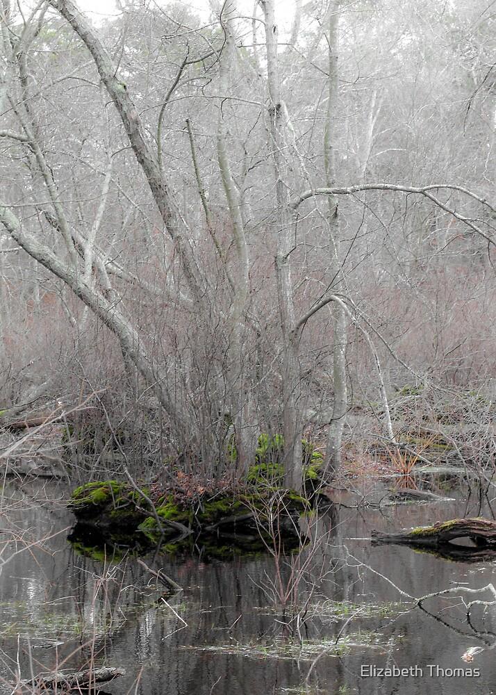 A Subtle Forest by Elizabeth Thomas